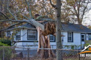 Trees That Could Damage Your Roof During a Storm featured image