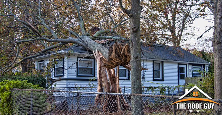 Trees That Could Damage Your Roof During A Storm The